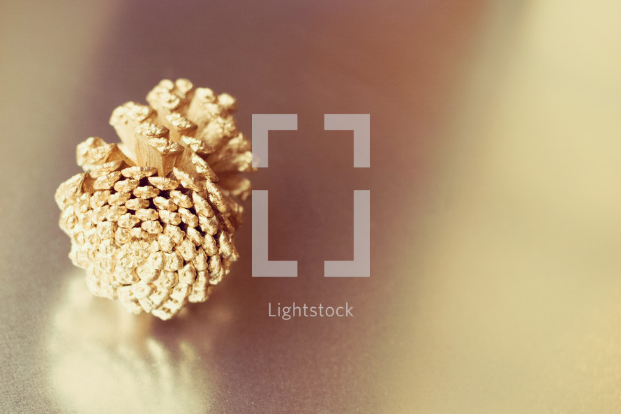 pinecone in sunlight