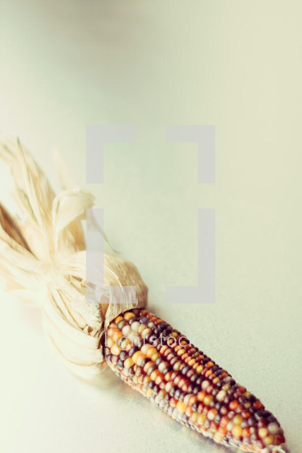 fall dried corn