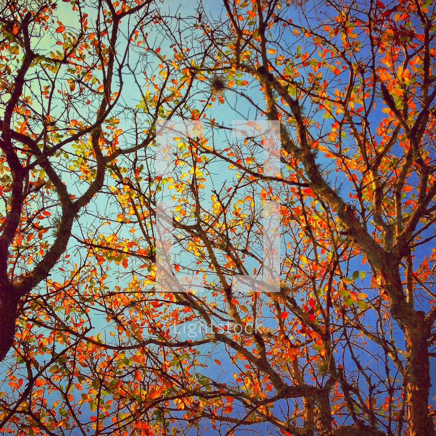 Fall tree branches