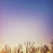 birds flying over winter trees.