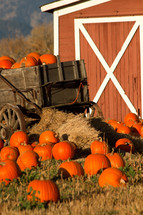 barn and pumpkin in a wagon