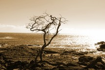 bare tree on a rocky shore