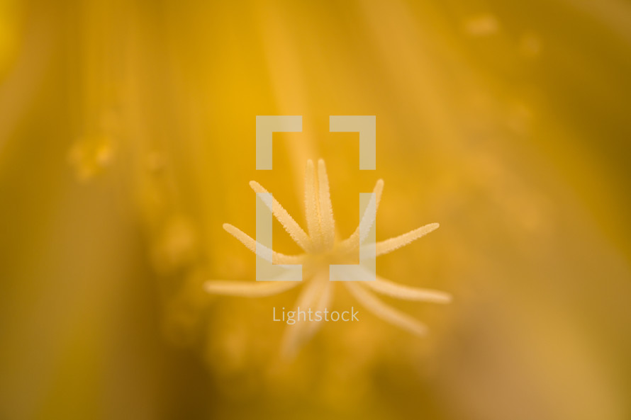 yellow abstract flower background