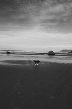dog running on wet sand at a beach