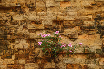 flowers growing from wall of ruins