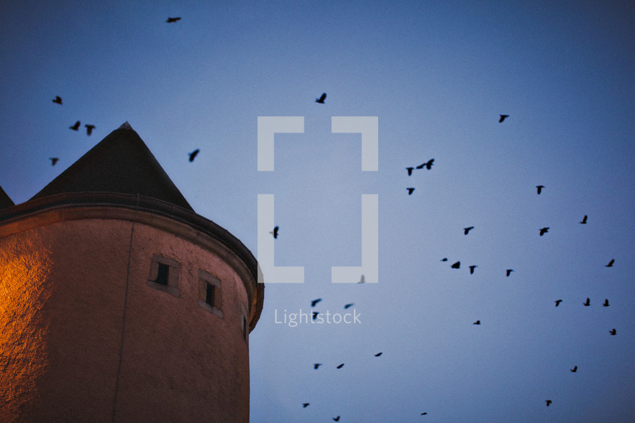pigeons in flight above a castle tower in Luxembourg