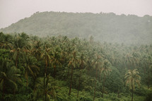 Palm forest in Thailand.
