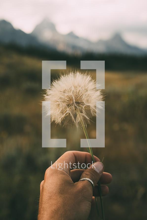 a man holding a dandelion