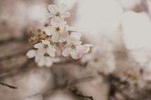 Stem of white flowers.