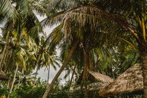 Straw thatched roof surrounded by palm trees.