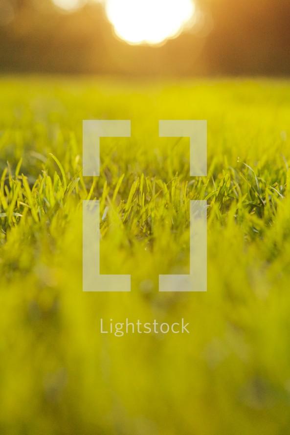 Sunrise over a grassy field.
