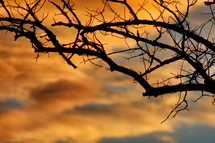 Sunset behind tree branches