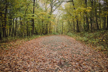 fall leaves on a path through the wood