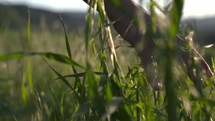 woman brushing her hand over tall grasses