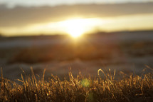 sunrise over a field of grasses