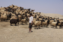 boy standing in front of a flock of sheep
