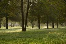 grassy forest floor