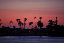 silhouette of palm trees in a fuschia sky