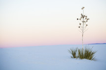 plant growing in white sand