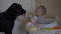 infant in a baby walker and pet dog