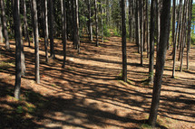 Forets trees