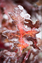 ice on dead leaf