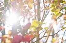 light on fall leaves