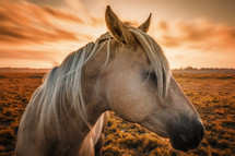 horse profile at sunset