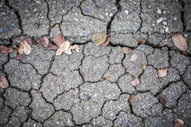 Leaves on the cracked earth.