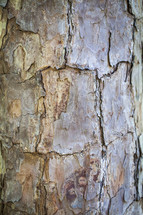 Cracked tree bark.