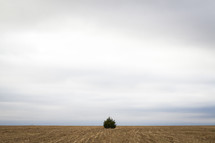 Tree on the horizon line between barren land and the sky.