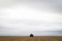 Tree on the horizon line between barren land and the sky.