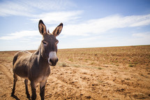 donkey standing in sand