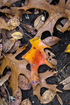 brown fall leaves on wet ground