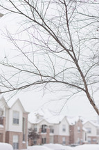 barren winter tree in front of townhouses