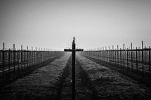 Grape stakes form rows of crosses in a rural California vineyard as the sun rises through the fog.