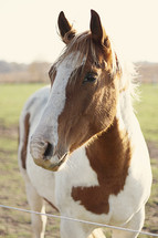 horse in a pasture