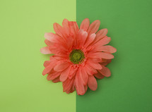 coral flower on a green background