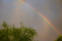 rainbow in the sky over trees