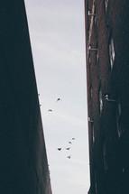 pigeons in flight between two brick buildings
