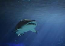 a shark under water