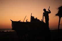 man with ox on a beach at sunset