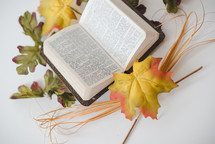 open Bible and fall leaves