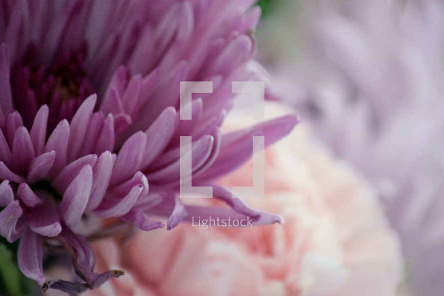 purple and pink flowers background