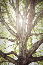 light beaming through rugged tree