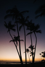 silhouette of palm trees on a beach at sunset