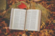 Open Bible on a rock in fall leaves