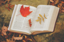open Bible on a rock surrounded by fall leaves