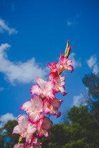 pink and white flowers against a blue sky