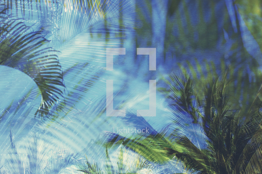 layered and textured compilation of palm branches, trees, and sky with texture and color added